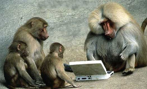 Baboons read four letter words