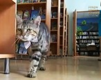 Kuzya the cat is promoted to assistant librarian in Russia