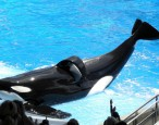 Former SeaWorld trainer's book tour stop cancelled after SeaWorld digs up dirt