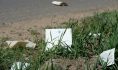 A new Literary Litterbug strikes Colorado, one year later