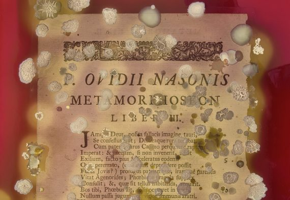 An artist transforms Ovid's <i>Metamorphoses</i>... with blood