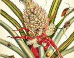 A foundational work of naturalist art and research goes to auction