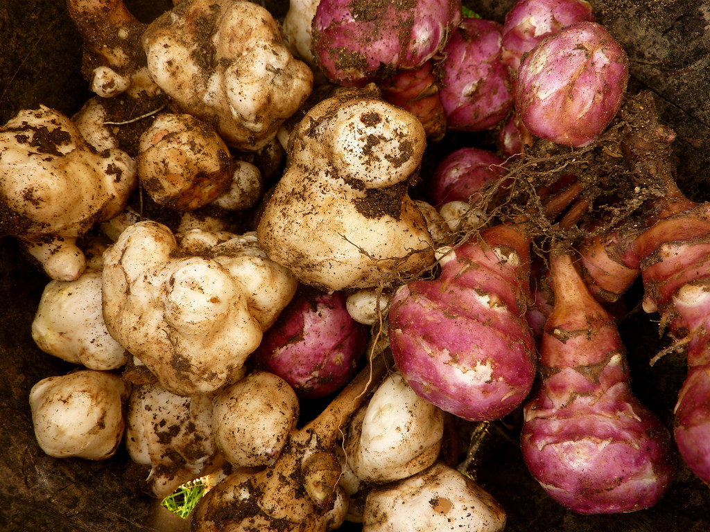 A UK jury's being forced to read a book on Jerusalem artichokes in a landmark vegecide trial