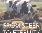 The Bovine Comedy: publishers race to secure Big Cow memoir (probably)